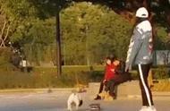 公园中一只可爱的斗牛犬玩滑板,网友:摩擦,摩擦,似魔鬼的步伐