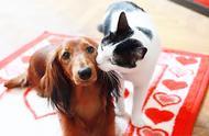这对猫咪和狗狗太恩爱,像极了女朋友和你撒娇时候的样子