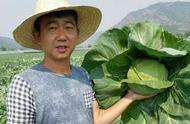大學生帶領農村貧困戶開墾荒地,種植有機蔬菜400畝
