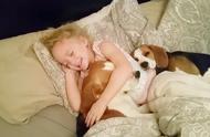 爸爸叫女儿起床,结果两狗一娃谁也不愿意起床,这撒娇姿态萌翻了