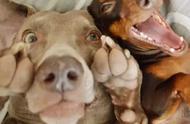 宠物自拍照告诉你,表情出众才能最抢镜!