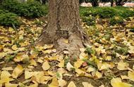 抓住秋天的尾巴,快来一睹许昌学院的秋色