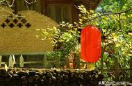 云南腾冲最美的银杏村,到了秋天一片金黄,秋游最美堪称这里