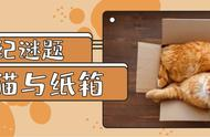 猫咪这么多的问题,竟然都可以用纸箱子来解决?