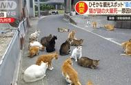 猫岛危机!猫咪数量爆减只剩三分之一,义工调查后发现恶心真相