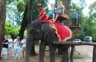柬埔寨吴哥窟游客不能再骑大象游览景区,因柬埔寨大象是濒危物种