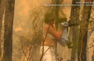 泪!小考拉爬过燃烧森林被人类救助!手部严重烧伤,哀嚎令人心碎