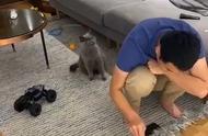 男子陪小猫玩游戏,老猫站在身后露出疑惑表情,老猫:怎么回事