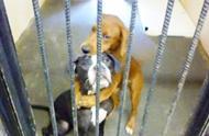 两只流浪狗长时间无人领养,即将被执行安乐死时,奇迹出现了!
