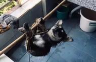 成都理工大学在读研究生虐狗,已被予以退学