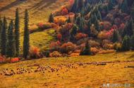 十月金秋不可错过的新疆北疆喀纳斯禾木自驾游路线?