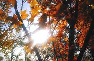 感恩节:万物有时,日子千篇一律,内心却可丰满