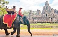 吴哥窟大象载客将被取缔,14头大象明年回归自然