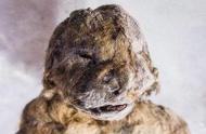 """外国发现了一块普通石头,竟然成为了""""动物木乃伊""""?"""