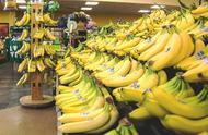 香蕉挂起来不容易坏,因为它觉得自己还长在树上?真相没那么简单