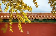 故宫的秋色,大抵是北京最有味道的!送你一份旅游攻略,偷得浮生半日闲吧……