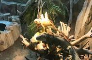 昨日大寒,记者走进南昌市动物园,探秘动物们的花式过冬方式