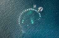 """罕见!英国一群座头鲸吐泡泡设""""陷阱""""捕鱼"""