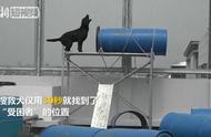 """直击台北搜救犬训练:30秒找到藏起来的""""受困者"""""""