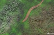 """三峡发现罕见""""移动""""动物化石,揭示5亿年前蠕虫的临终遗迹"""