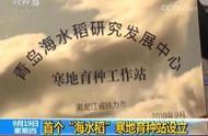 """袁隆平团队来了,高寒的东北也要种""""海水稻""""了"""