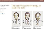 2019年诺贝尔生理学或医学奖公布 3位科学家分享该奖项