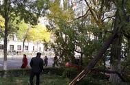 北京大风来袭,吹断多棵树木,市民出行要注意安全