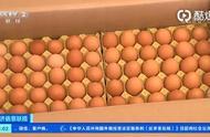 """""""鸡""""会来了!鸡价上涨后,蛋农每月多赚1万元"""