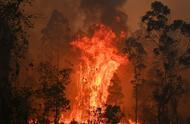 澳大利亚大火肆虐:两个州进入紧急状态、超300只考拉葬身火海.....