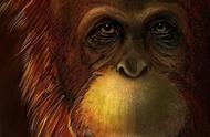 巨猿与亚洲猩猩是亲戚!山大教授在《自然》发文论证这一关系