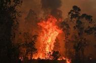澳大利亚东部仍有13处山火未控制 一男子高原纵火被起诉