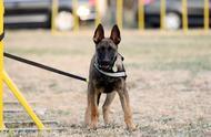 北京6头警用克隆犬正式入警