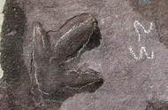 承德避暑山庄恐龙足迹研究重大成果:发现大量侏罗纪恐龙足迹