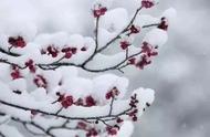 「二十四节气」今日大雪