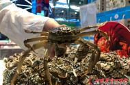 """大闸蟹价格下跌达15%""""蟹见愁""""们盯上50元以下的螃蟹"""