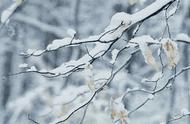 大雪节气,带你走进唯美的冰雪世界