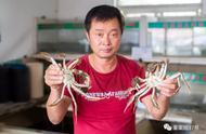阳澄湖大闸蟹打假调查:北京市面多为冒牌,当地欲打造塘蟹新品牌