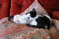 """从猫咪之间发生的争斗,可以看出""""猫界""""的5个规则,点到即止"""