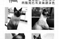 杭州 女子悬赏万元寻猫 找到后却不给钱 还有人在微信群教她作假