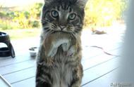 猫咪总是叼奇奇怪怪的东西送给我,到底是为啥啊?