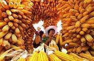 """""""丰收节""""已到,专家提议秸秆还田,如今农民损失严重,谁负责?"""