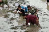 大学生回乡创业养虾遭哄抢?有村民声称没抢虾 只有些老人捞鱼