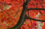 99张照片告诉你:世间最美的秋天,就在温哥华