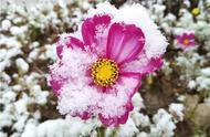 长春入秋的第一场雪来啦!降雪首秀奏响冬天来临前的序曲