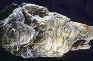 西伯利亚发现4万年前的狼头,皮毛牙齿都保存完好,死因十分离奇