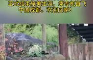 """旅美大熊猫""""贝贝""""乘专机直飞成都 欢迎回家!"""