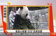 """欢迎回家!大熊猫""""贝贝""""结束旅美生涯,踏上回国旅程"""