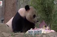 欢迎宝贝回家!旅美大熊猫贝贝回家 专机直达成都
