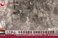 江西庐山形成今冬首场雾凇,清秀雅致晶莹剔透,引游客登山赏景
