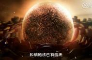 日本研究团队发现,超长寿者血液携带特殊T细胞